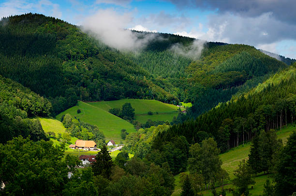 Asal-usul Nama Black Forest