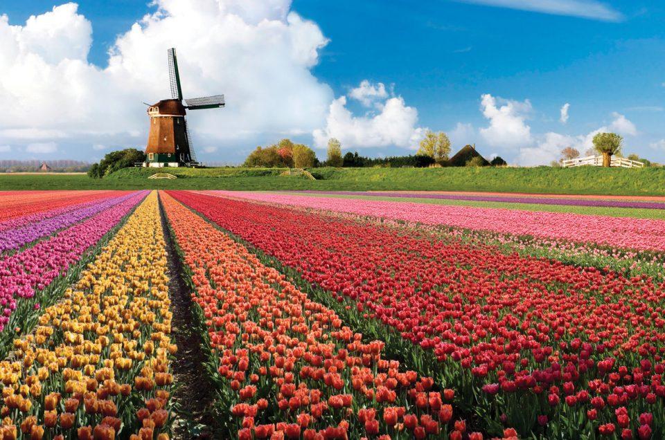Festival Keukenhof Belanda