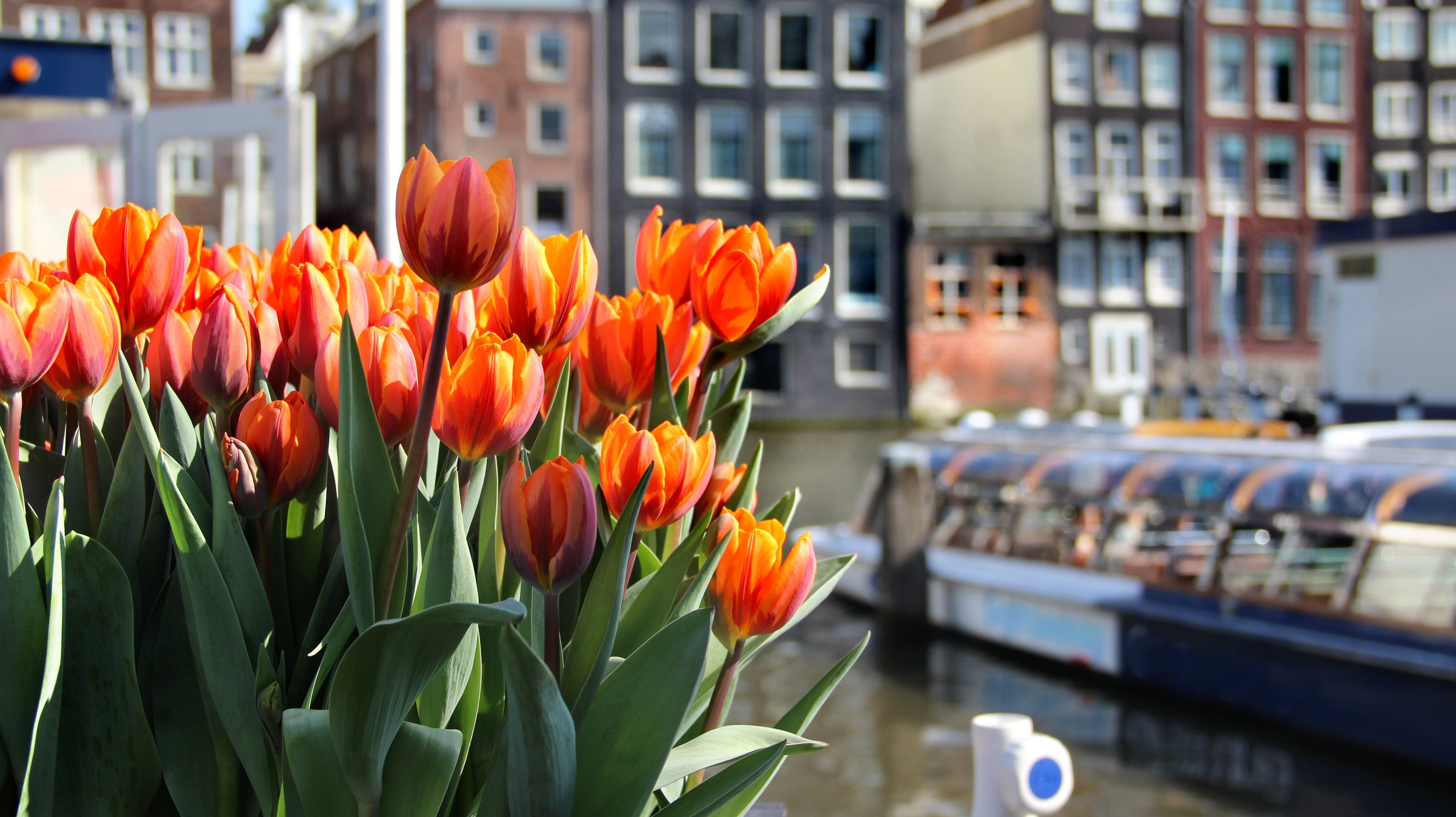 Paket Tour Eropa Barat Wisata Muslim Maret 13 Hari 12 Malam Musim Semi (Spring)
