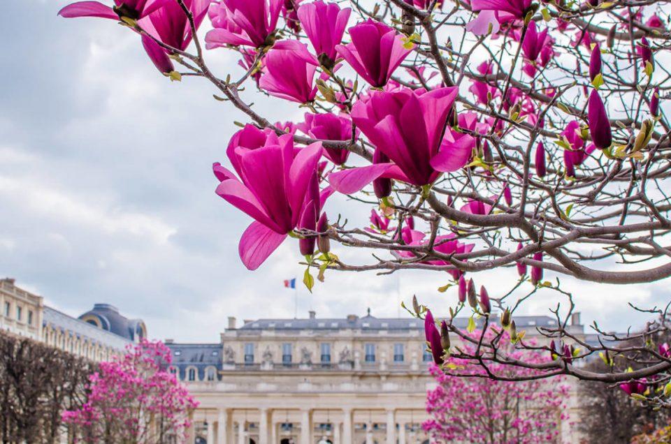 Paket Tour Eropa Barat Wisata Muslim Mei 8 Hari 7 Malam / Musim Semi (Spring) 2021